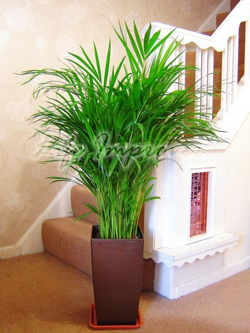 Green Home Decor That Cleans The Air Top Eco Friendly