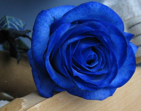 blue gift of roses and personal notes on petals