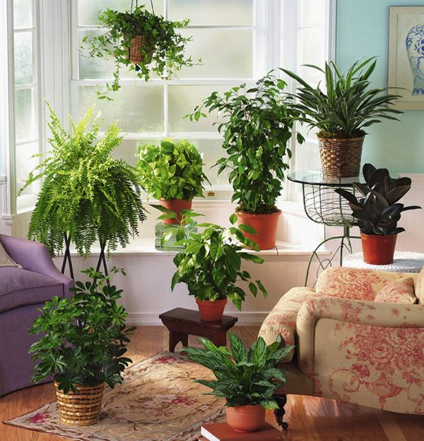 Elegant Fern Decor For Room Windows Facing North And Interiors Lacking Sunshine