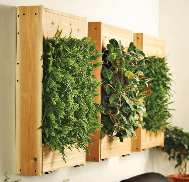 Maranta plant for interior decorating with green accessories - Interior decorating with plants ...
