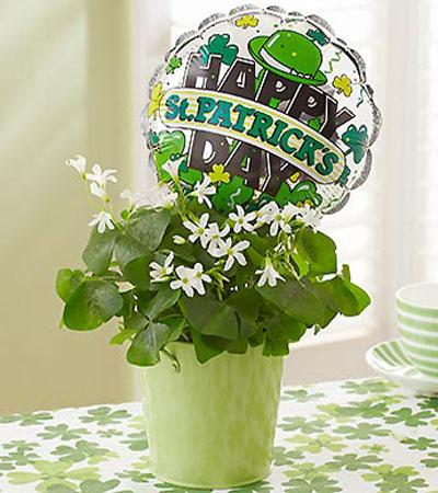 table centerpiece and gift idea with shamrock plant