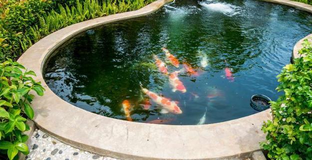 garden design fish pond