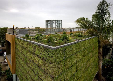 Green Building Green Wall And Rooftop Garden For Modern