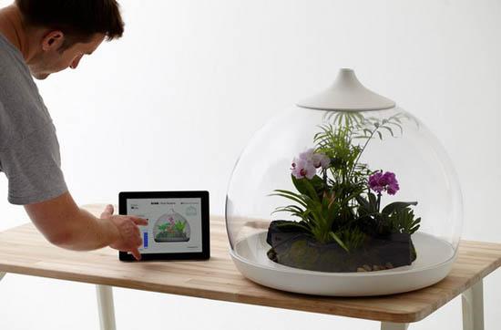 Eco Friendly Home Decorations Biome Smart Terrarium Design Ideas