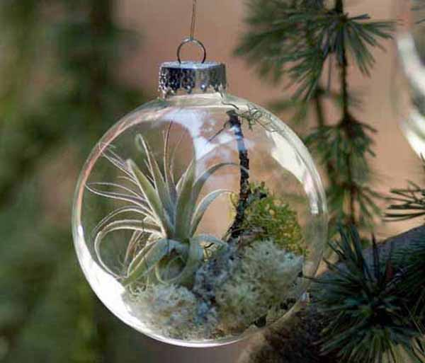 glass christmas tree decorations with miniature green plants