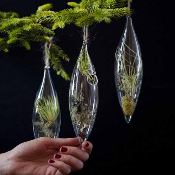 transparent glass christmas tree decorations with miniature green plants