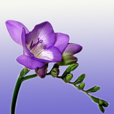 Blue And Purple Flower Arrangements Symbolic And Elegant