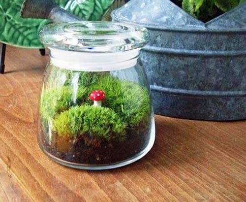 plant terrarium in small glass jar