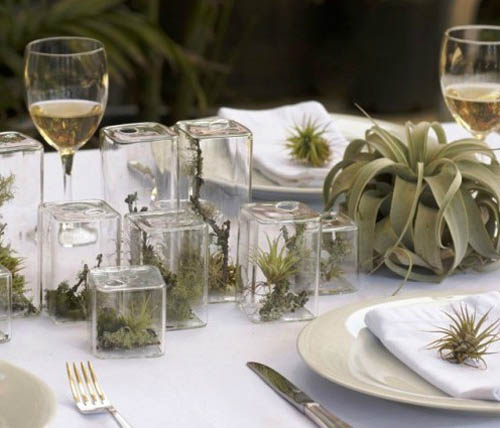 Best Home Decor Gifts 2012: 20 Ideas For Home Decorating With Glass Plant Terrariums