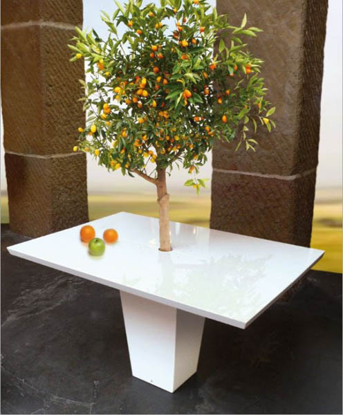 white dining table with tree