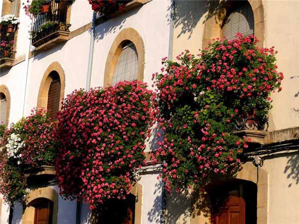 Bright Balcony Decorating with Flowers, 20 Blooming ...