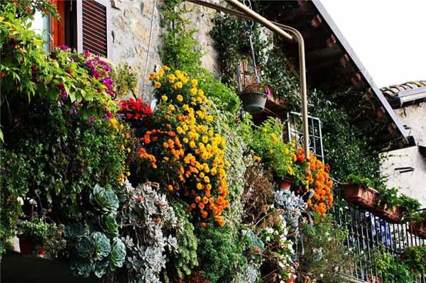 balconies with blooming plants