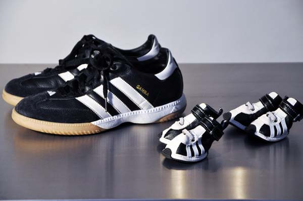 Adidas Sportswear And Sneakers For Small Dogs Fun Pet Design Ideas