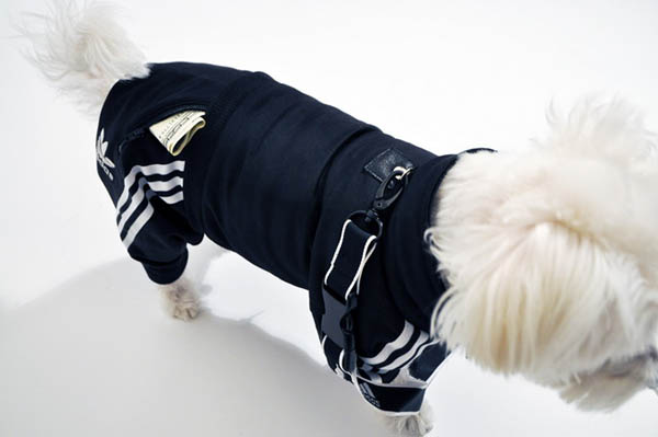 Adidas Sportswear And Sneakers For Small Dogs Fun Pet