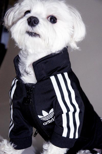 adidas tracksuit for dog