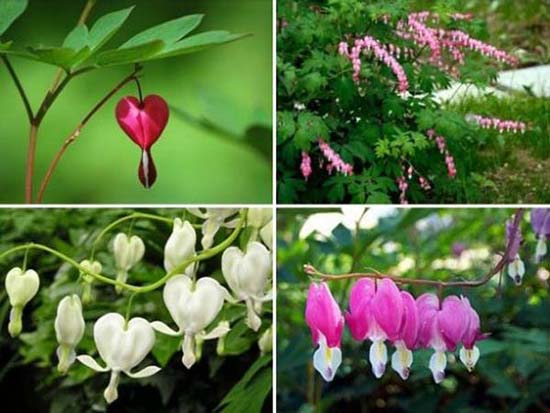 heart shaped plants for mothers day gifts