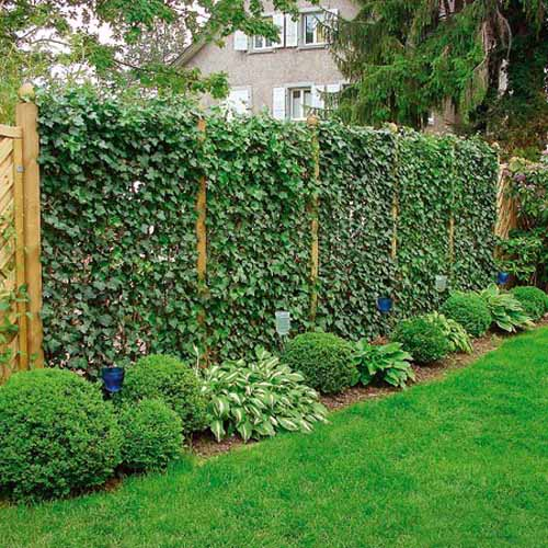 20 green fence designs plants to beautify garden design and yard rh lushome com