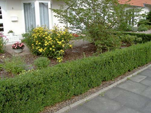 Bushes For Front Of House furthermore Front Yard Landscaping Ideas With River Rocks additionally Landscaping And Walkway in addition Knockout Roses likewise Residential Landscape. on flowers front yard landscaping ideas