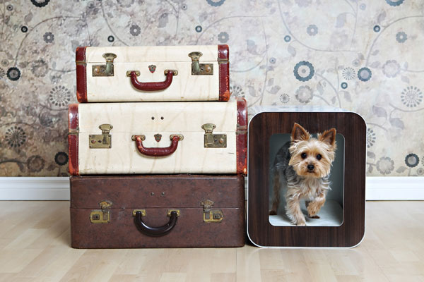 small dog house and suitcases