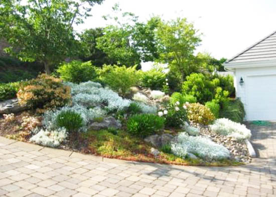 Rocks Garden Design With Blooming Plants Should Be Arranged Away From Large Trees Which Create Shade And Take Water Nutrients The Soil
