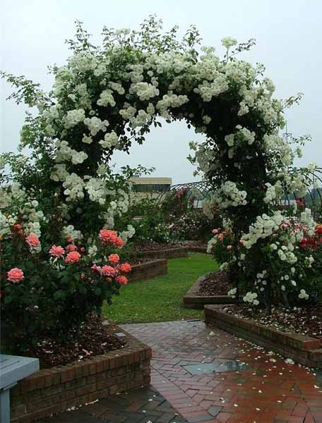 Beautiful Simple Garden Design Plans: Roses For Beautiful Outdoor Decor, Charming Garden Designs