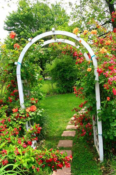 Roses for beautiful outdoor decor charming garden designs - Small backyard landscaping ideas ...