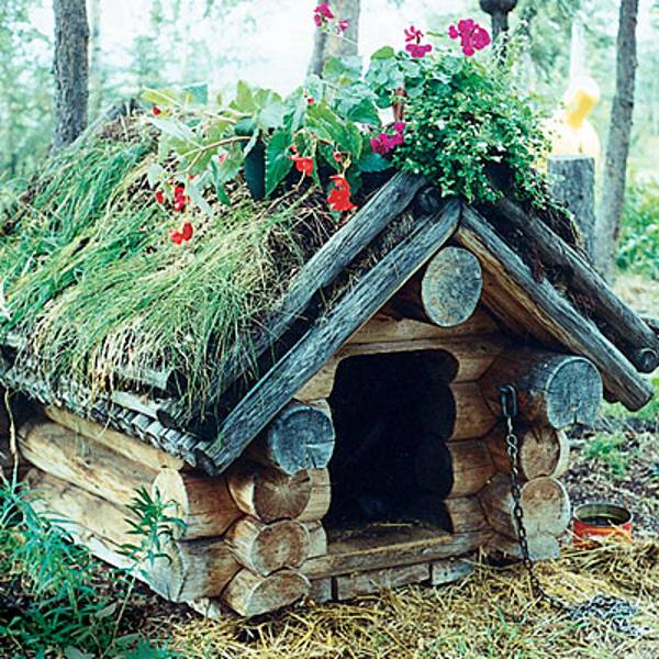 30 Dog House Decoration Ideas, Bright Accents for Backyard Designs Backyard Ideas For Pets on fence ideas for pets, basement ideas for pets, swimming pools for pets, diy for pets, design ideas for pets, balcony ideas for pets, christmas ideas for pets, interior design for pets, art ideas for pets, party ideas for pets, water features for pets, gifts for pets, playroom ideas for pets, food for pets, craft ideas for pets,