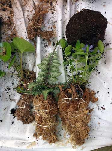Kokedama Garden Design Ideas Easy Eco Friendly Home