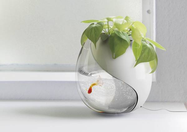 planter with indoor plants and small aquarium with goldfish