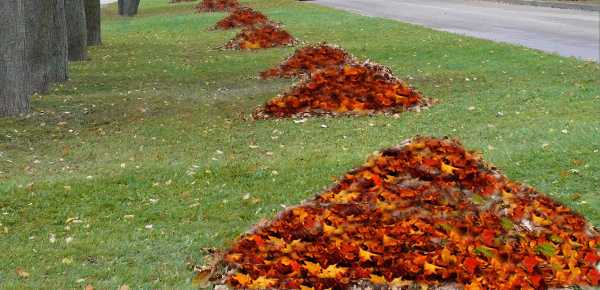 fall leaves piles on green grass