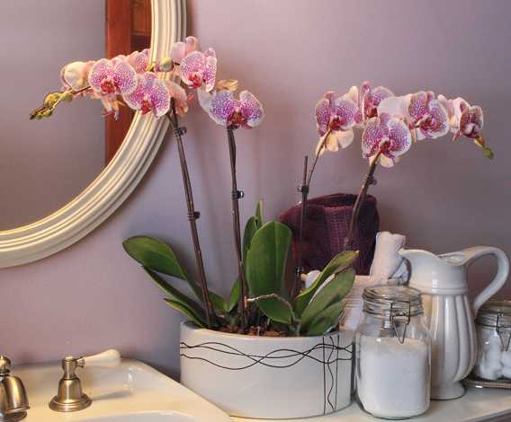 Beautiful Bathroom Decorating And Home Staging With Orchids