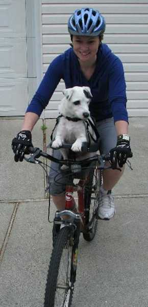 contemporary design of bike seat for pet