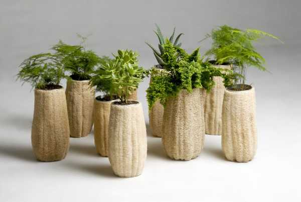 planters made with loofah sponge