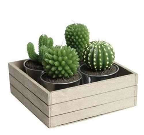 cacti candle set