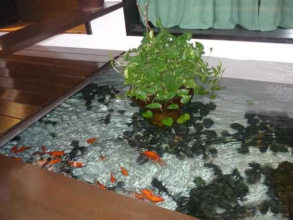 water garden in living room