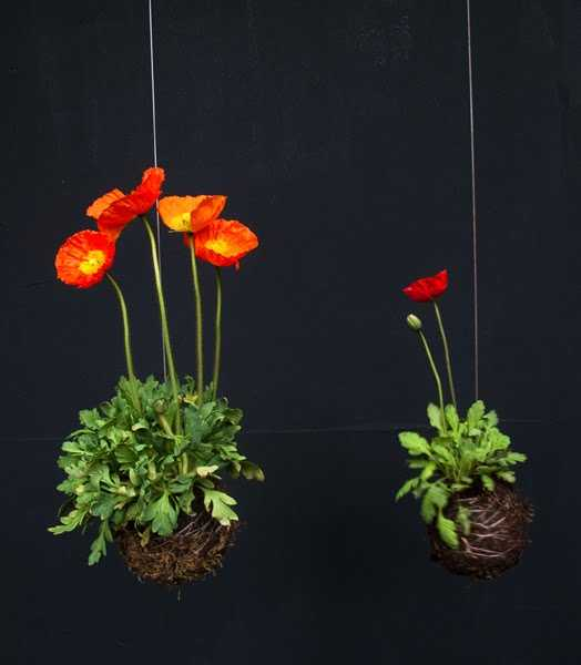 15 gorgeous red poopy flower arrangements and remembrance day table red poppy flower table decoration mightylinksfo