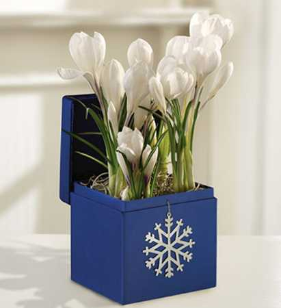 white flowers in blue bos decorated with snowflake