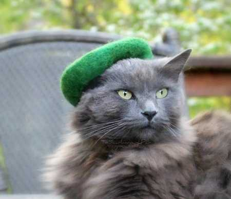 cat in green hat