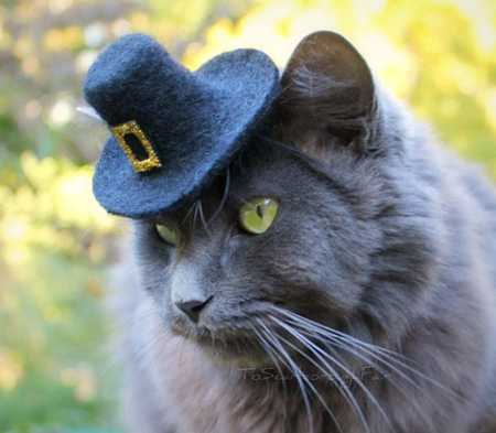 Charming Hats For Modern Cats And Dogs Fun Design Ideas
