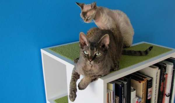 carpeted top shelf for cat bed