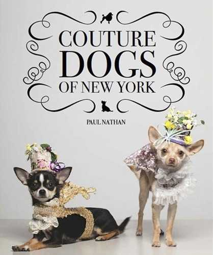 Bohemian Dog Clothes And Accessories, Couture Dogs In New