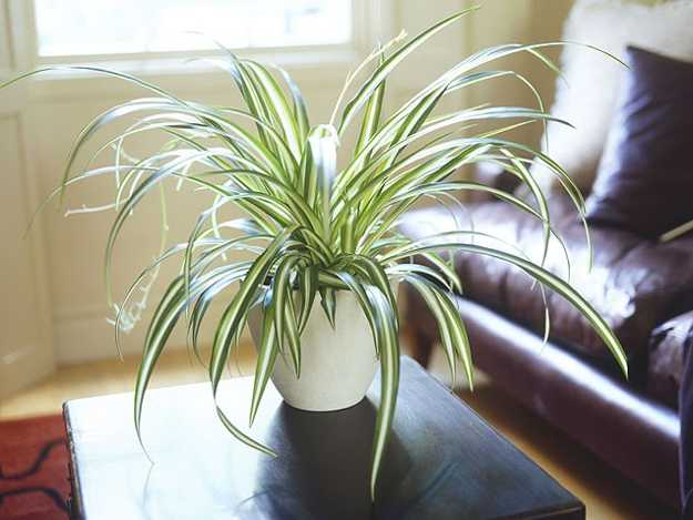 Modern Interior Decorating Ideas Incorporating Indoor Plants Into