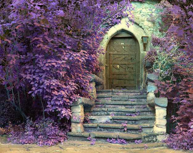 Antique exterior wood door with stone stairs and flowers