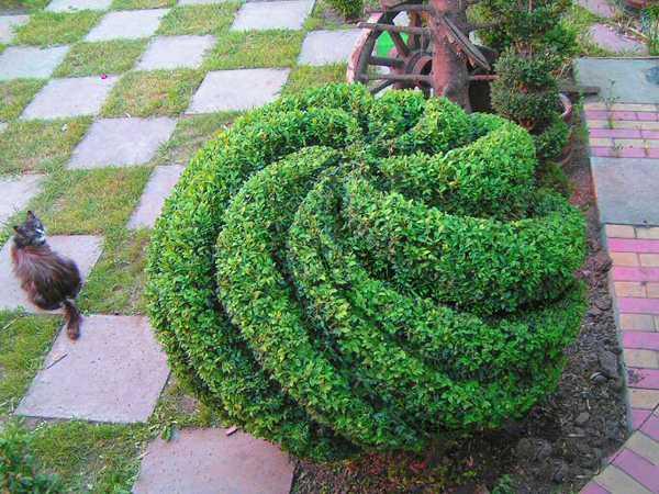 globe topiary design