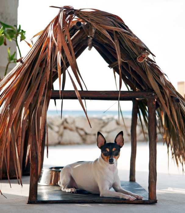 small dog sunshade
