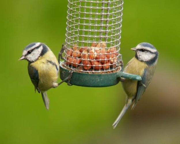 Modern Bird Feeders Attract Birds and Add Beautiful Yard ...