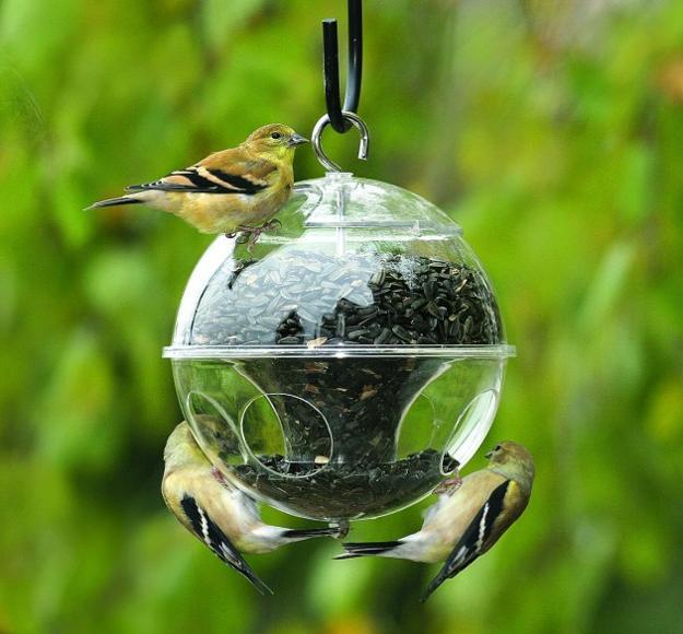 Design a Yard That Will Invite Birds