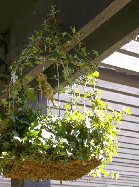 Diy Backyard Ideas Turning Metal Wire Into Beautiful