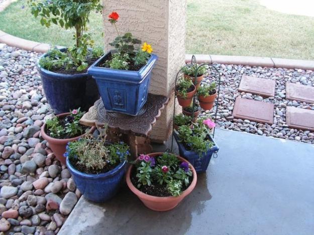 Container Garden Design Ideas