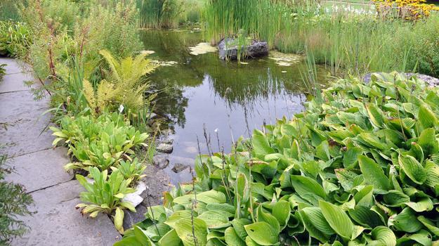 Natural Backyard Landscaping Ideas, Save Money Creating Wildlife ...